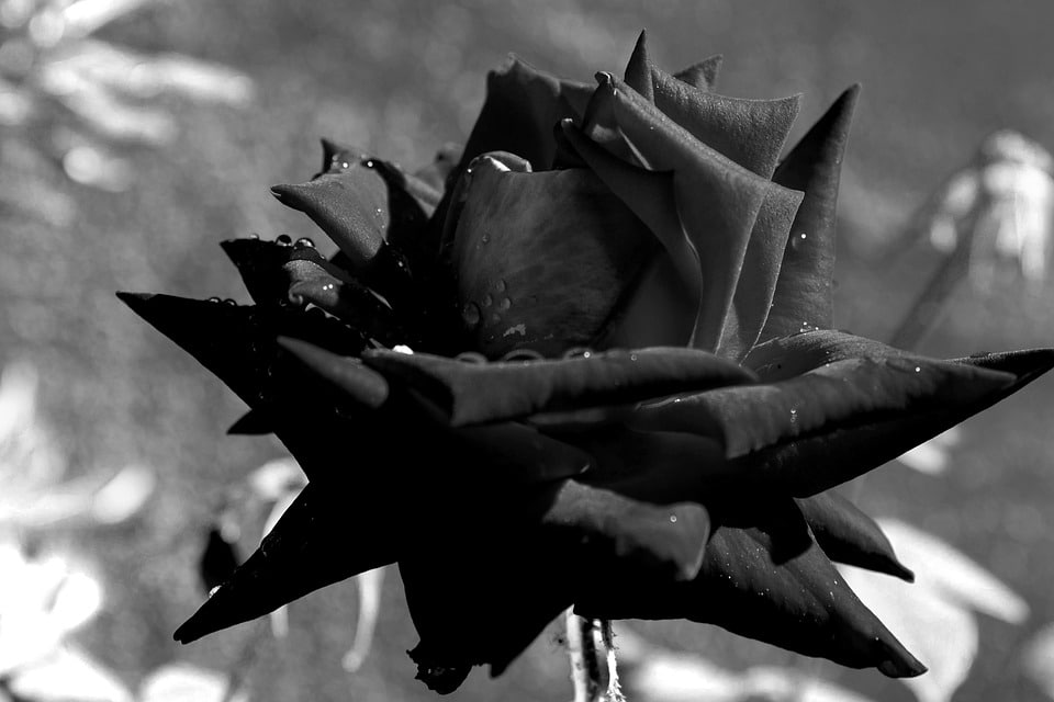 Trauma – avain Pandoran lippaaseen